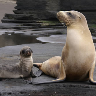 Sea Lion, Galapagos Highlights Tour